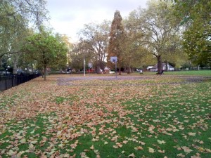 Kennington Park Fall Leaves
